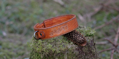 Leather collar for a dog